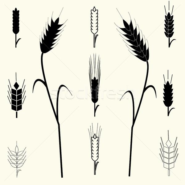 пшеницы ушки набор дизайн логотипа органический завода Сток-фото © BoogieMan