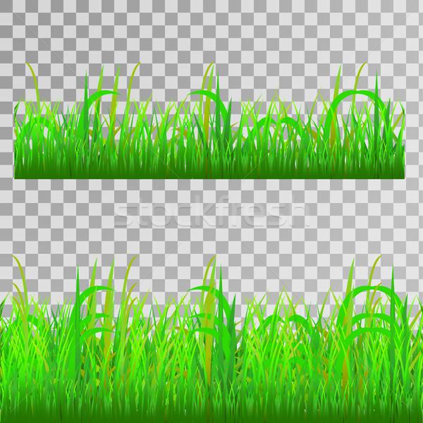зеленая трава бесшовный текстуры прозрачный вектора весны Сток-фото © BoogieMan