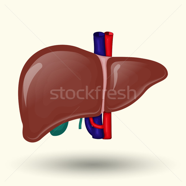 Human liver cartoon design Stock photo © BoogieMan