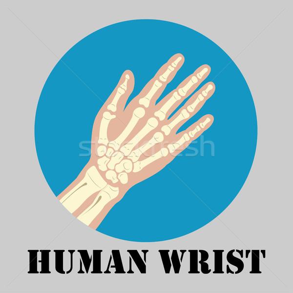 Human wrist emblem Stock photo © BoogieMan