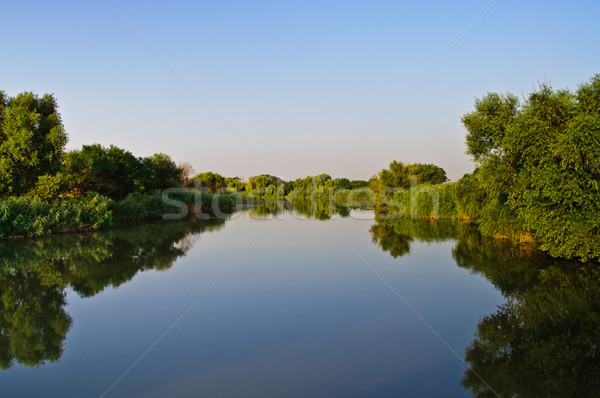 Water mirror. Pond, green vegetation. Stock photo © Borissos