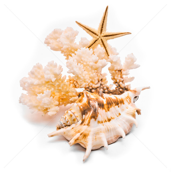 Beyaz mercan denizyıldızı yalıtılmış doğa deniz Stok fotoğraf © Borissos