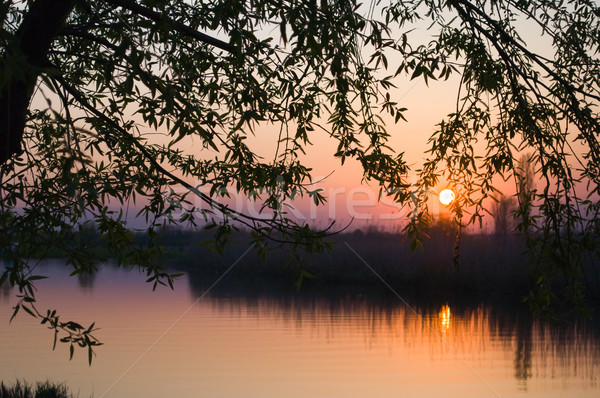 Nehir yaz ağaç gün batımı manzara arka plan Stok fotoğraf © Borissos