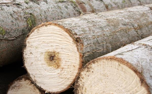 Legname taglio legno industria energia Foto d'archivio © borna_mir