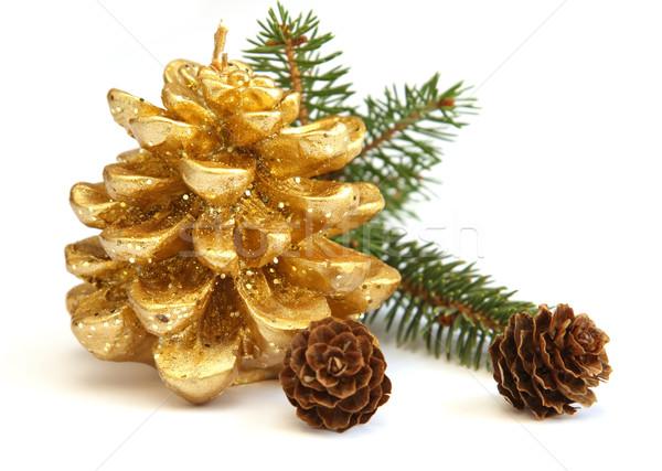 Dourado pinho cone ramo árvore de natal isolado Foto stock © borna_mir