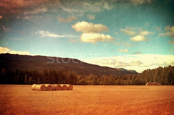 Veld hooi vintage foto stijl gras Stockfoto © borysshevchuk