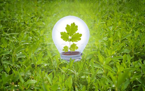 Gloeilamp gras groene energie tuin veld groene Stockfoto © borysshevchuk