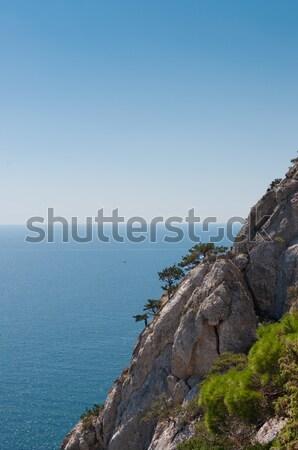 деревья растущий крутой высокий морем Сток-фото © borysshevchuk