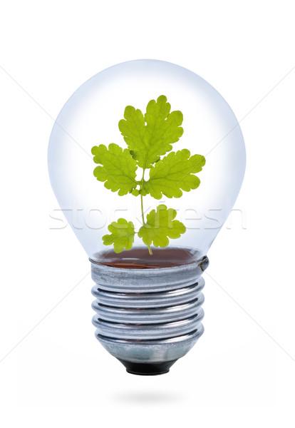 Light bulb with leaves inside. Stock photo © borysshevchuk