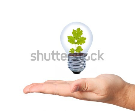 Light bulb in hand with leaves inside. Stock photo © borysshevchuk