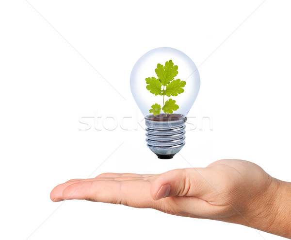Bulb with leaf above palm. Stock photo © borysshevchuk