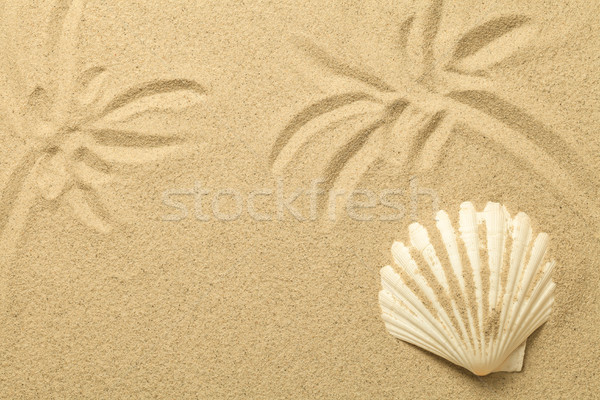 Palm Trees Drawn in the Sand. Summer Background with Shell Stock photo © Bozena_Fulawka
