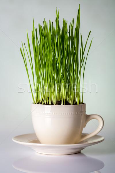 Green Grass Stock photo © Bozena_Fulawka