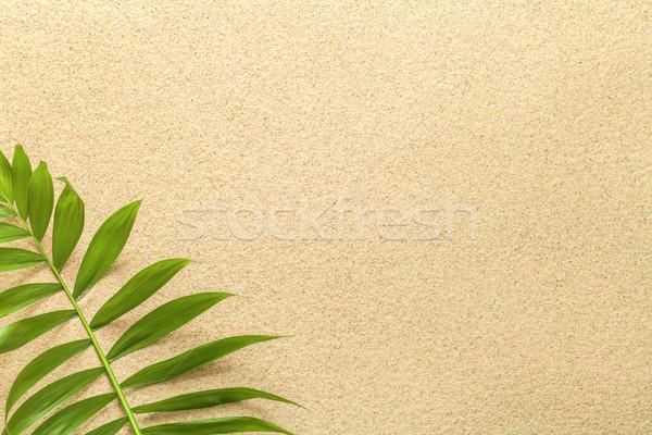 Summer Background with Green Palm Leaf Stock photo © Bozena_Fulawka