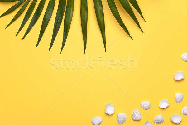 Zomervakantie vakantie schelpen groen blad palm exemplaar ruimte Stockfoto © Bozena_Fulawka