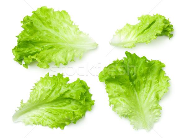 Lettuce Salad Leaves Isolated on White Background  Stock photo © Bozena_Fulawka