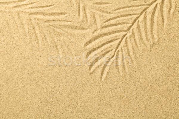 Pálmalevelek rajzolt homok nyár tengerpart textúra Stock fotó © Bozena_Fulawka