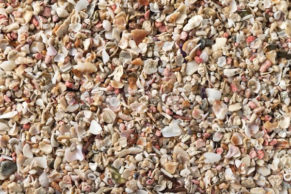 Crushed seashells Stock photo © Bozena_Fulawka