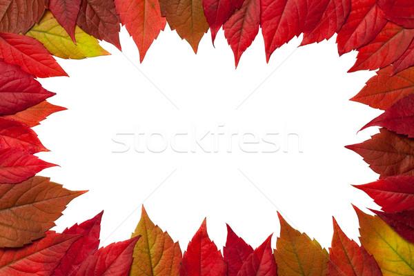 őszi levelek keret fehér Virginia levelek felső Stock fotó © Bozena_Fulawka