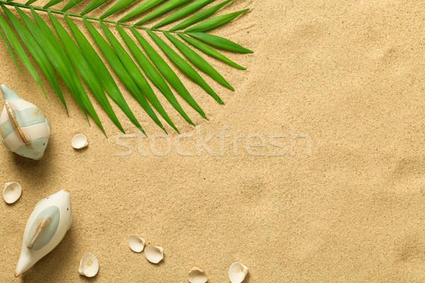 été vert feuille de palmier poissons obus plage Photo stock © Bozena_Fulawka