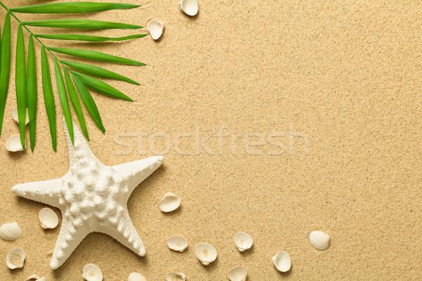 Zomer groene palmblad zeester schelpen strand Stockfoto © Bozena_Fulawka