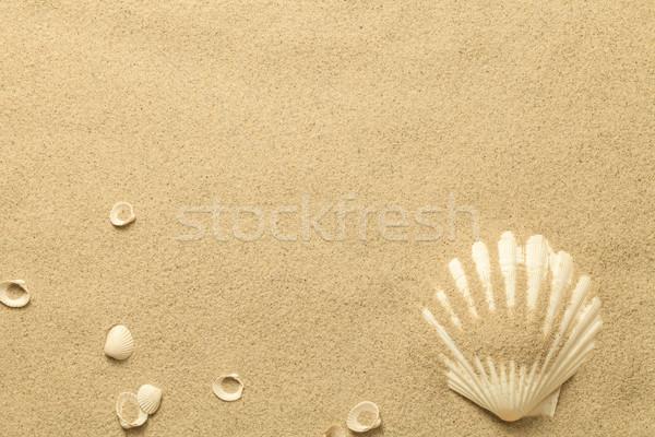 Summer, Sand Background with Shells Stock photo © Bozena_Fulawka