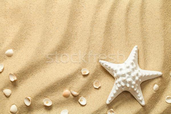 Verão areia starfish conchas praia textura Foto stock © Bozena_Fulawka