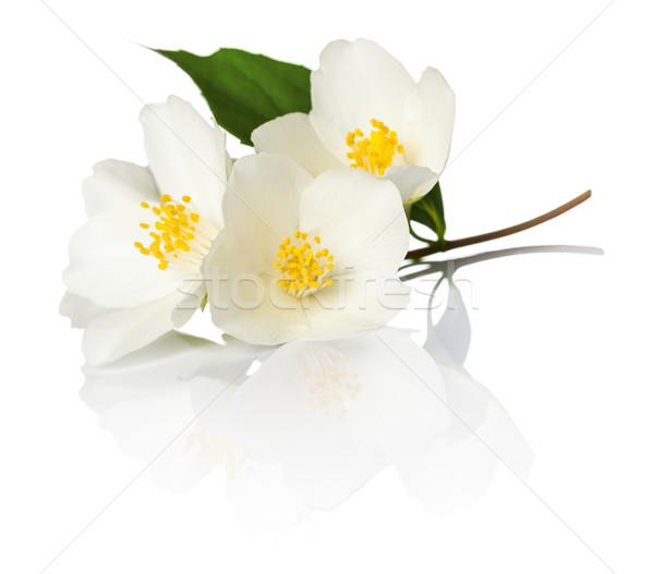 Bloemen witte macro shot voorjaar groene Stockfoto © Bozena_Fulawka