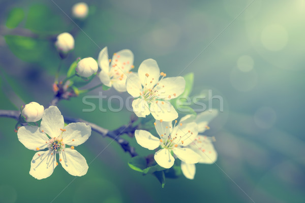 Spring Flowers Stock photo © Bozena_Fulawka