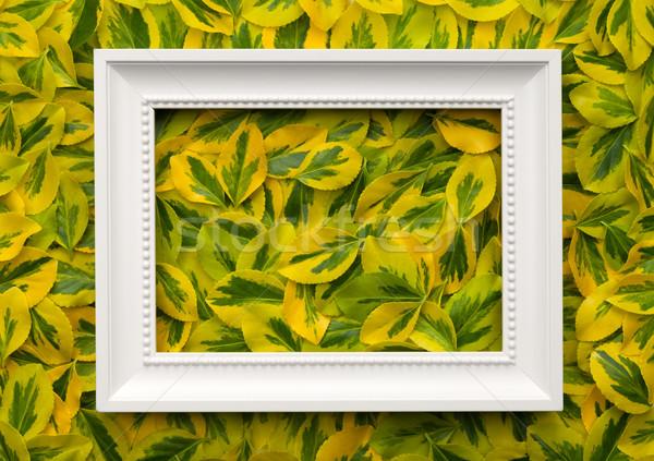Witte frame bladeren exemplaar ruimte top Stockfoto © Bozena_Fulawka