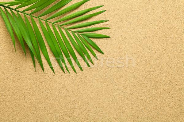 Verano verde hoja de palma playa textura espacio de la copia Foto stock © Bozena_Fulawka