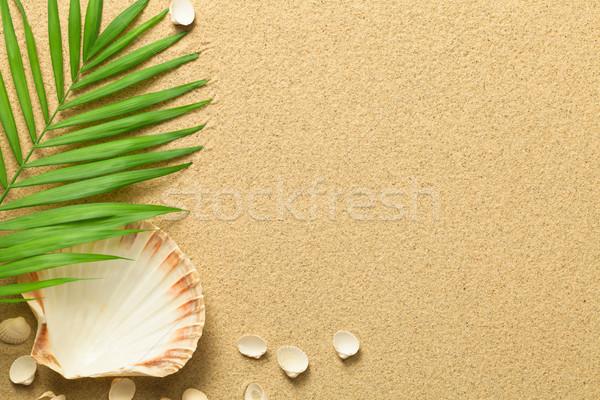 Verão verde folha de palmeira conchas praia textura Foto stock © Bozena_Fulawka