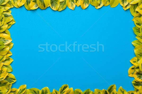Levelek keret kék copy space felső kilátás Stock fotó © Bozena_Fulawka
