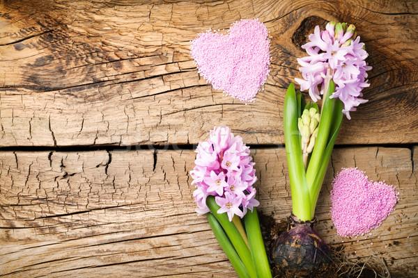 Jardinagem jacinto flores mesa de madeira cópia espaço topo Foto stock © Bozena_Fulawka