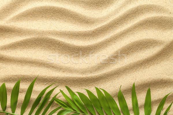Summer Background with Green Palm Leaves Stock photo © Bozena_Fulawka