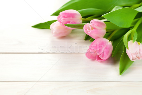 весны Tulip цветы копия пространства цветок древесины Сток-фото © Bozena_Fulawka