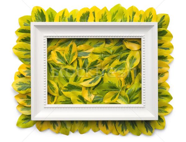 Witte frame bladeren geïsoleerd exemplaar ruimte top Stockfoto © Bozena_Fulawka