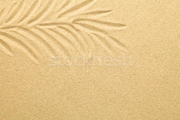 Pálmalevél rajzolt homok nyár tengerpart textúra Stock fotó © Bozena_Fulawka