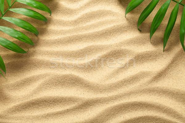 Nyár zöld pálmalevelek tengerpart textúra copy space Stock fotó © Bozena_Fulawka