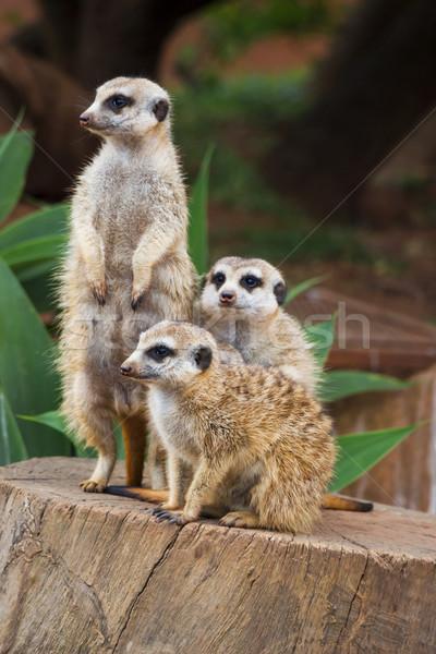 グループ 一緒に 肖像 ツリー 暗い 動物 ストックフォト © bradleyvdw
