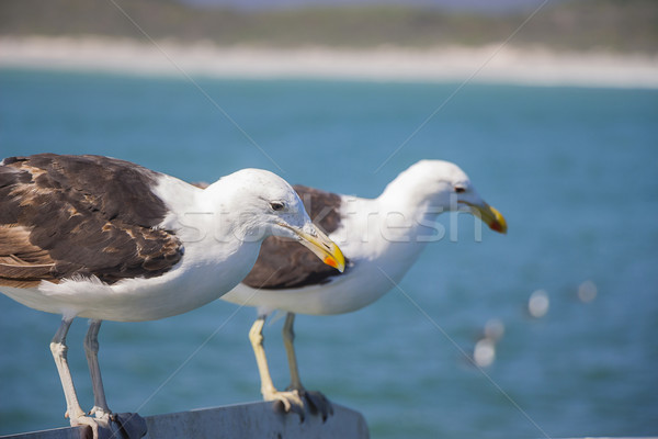 Seagulls Perched on the Edge of the Boat Stock photo © bradleyvdw