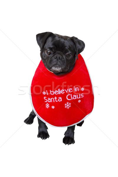 Black Pug Wearing Christmas Attire 1 Stock photo © bradleyvdw