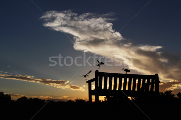 Park Bench Silhouetted Against a Cloudy Sunset With Birds Stock photo © bradleyvdw