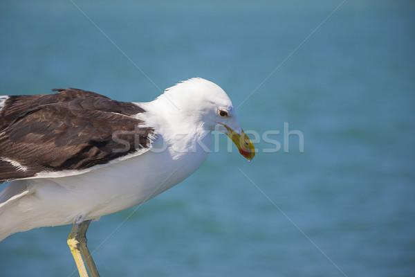 鴎 エッジ ボート 背景 海 空 ストックフォト © bradleyvdw
