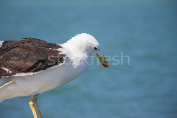 Foto stock: Gaviota · borde · barco · fondo · océano · cielo