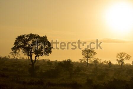 Golden Sunrise Stock photo © bradleyvdw