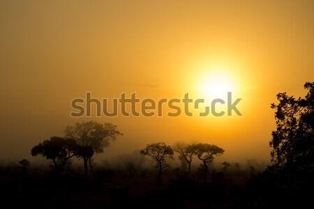 霧の 午前 日の出 ツリー シルエット ストックフォト © bradleyvdw