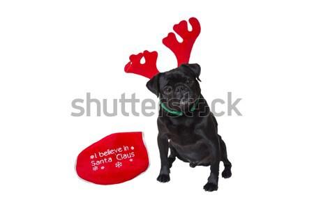 Stock fotó: Fekete · visel · karácsony · viselet · kíváncsi · rénszarvas