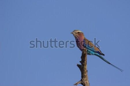 Stock fotó: Magányos · gyönyörű · kék · ég · égbolt · kék · portré