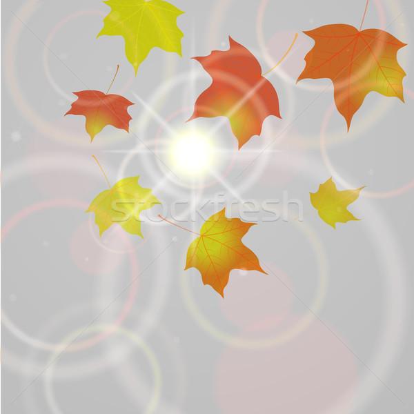 秋 飛行 葉 eps10 ベクトル ストックフォト © brahmapootra